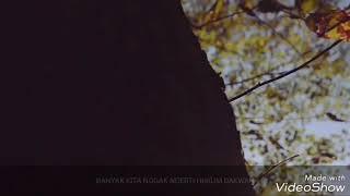 Nasehat Bijak  - Ust. Syafiq Reza Basalamah • Jika kau mencintainya tinggalkan dia