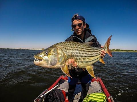 Tigerfish Frenzy (On The Drift) - FlyBru