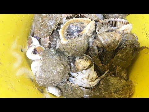 小倪夜晚趕海,螃蟹貓眼螺香螺沙灘上跑,大海螺成堆聚集【小倪趕海】