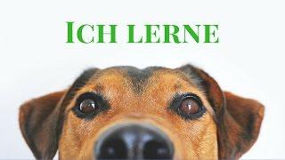 Hundetraining Online - Tipps und Empfehlung - Teil 2
