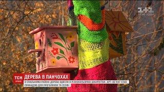 У спальному районі Києва кілька дерев одягли в різнокольорові панхочи