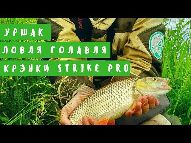 Ловля голавля на реке Уршак. Крэнки Strike Pro
