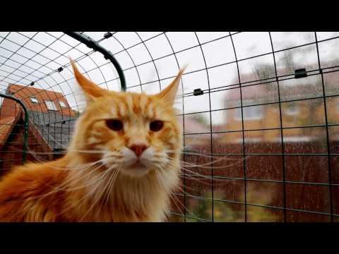 Outdoor Katzengehege | Omlet Haustierprodukte
