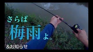 梅雨最終日のシーバス釣行編 & お知らせ【遠征行ってきます】
