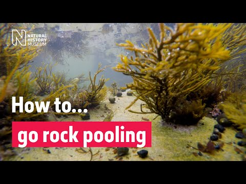 How To Go Rockpooling | Natural History Museum
