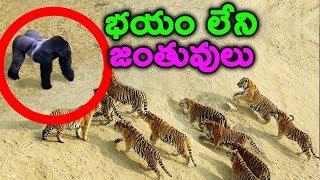 దేనికి భయపడని జంతువులు || Most Fearless Animals || T talks