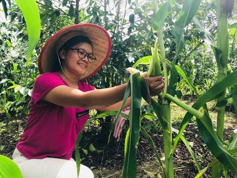 masakan-desa|cooking-baby-corn(-masakan-capcay-dan-daging-bakar-batu)
