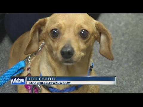 Woman Coordinates Rescue Of 11 Dogs From Ohio