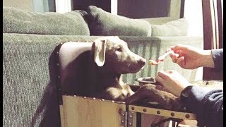 毎日赤ちゃんの椅子でご飯を食べる犬。その理由はとても深刻なものだっ...