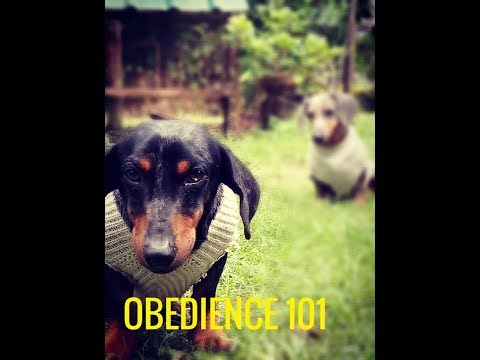 how-to-train-your-dog-(obedience-training-#3)