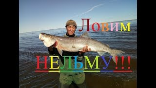We catch nelma and omul! Fishing in Yakutia! Russia Eng Subs