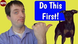 The 3 Min Pin Puppy Training Tips You Must Do First!