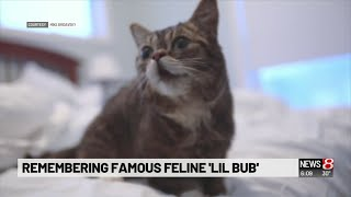 Hoosier owner mourns famed feline Lil BUB, more than 'Instagram cat'