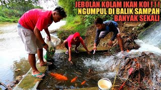 GILAK!!! Temukan Ikan Koi Besar Jebolan Kolam Di Balik Tumpukan Sampah