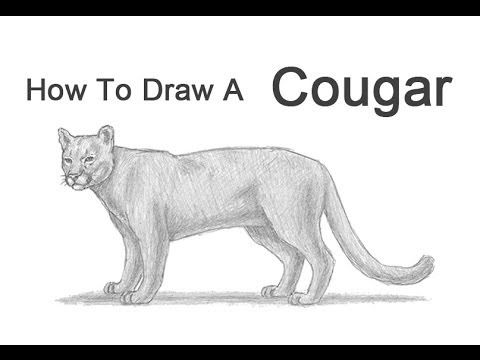 how to draw a cougar mountain lion youtube