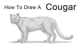 How to Draw a Cougar (Mountain Lion)