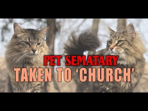 Meeting 'Church' the cat from Pet Sematary