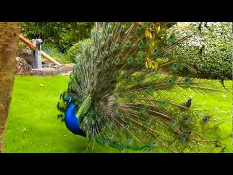 Kyoto Garden in Holland Park, London