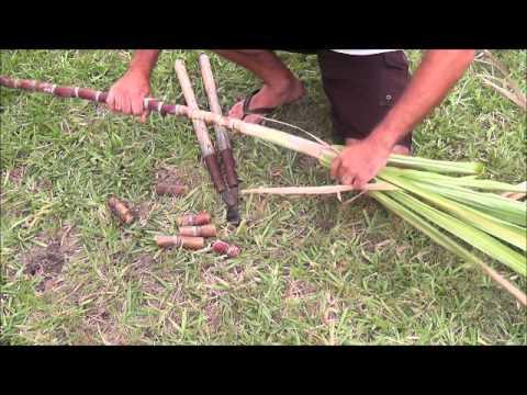 How to Grow Florida Red Sugar Cane