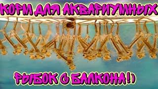 видео Разведение аквариумных рыбок