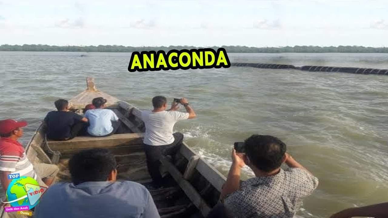 Download Pengunjung Pantai Berhamburan, Anaconda Raksasa Tiba² Keluar Dari Dalam Laut Menghampiri Wisatawan..