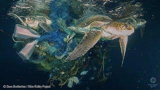 When Sea Turtles and Fishermen Collide