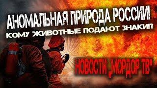 Смотреть видео Новости Мордора в России сегодня! Аномальная природа в России! Кому животные подают знаки! онлайн
