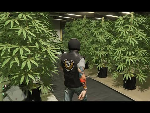 Ep69 Dude! MC Weed Farm! From Tiny Clone To Fully Grown! - Let's Play GTA 5 Online PC 1080p HD