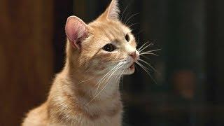 НЕ ДЕТСКИЕ ПРИКОЛЫ Смешные детки Животные рулят - Прикольное видео (2019) МатроскинТВ