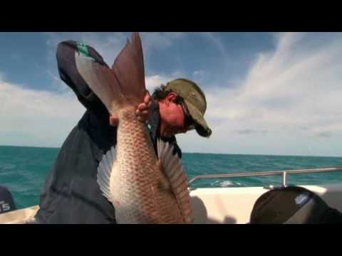 SNAPPER FISHING on lures -  triple hook-up 14.5kg giants!