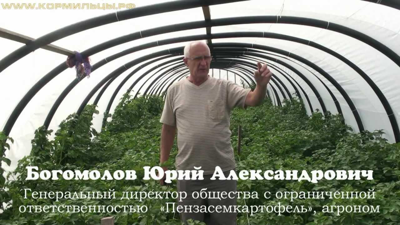 как выращивать зимой картошку в типлице