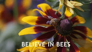 Believe In Bees - Full Documentary