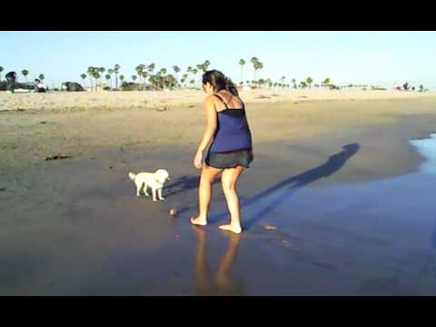 Yurizan Beltran and her dogs at a dog beach