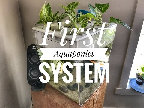 First Aquaponics System