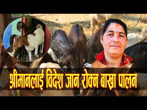 महिला उद्यमीको लोभलाग्दो व्यवसाय, श्रीमानलाई विदेश जान नदिन गरिन बाख्रा पालन|Kamala Devi Dangi Rolpa