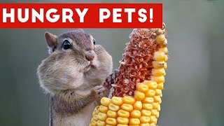 The Funniest Hungry Pet & Animal Videos Weekly Compilation 2016 | Funny Pet Videos