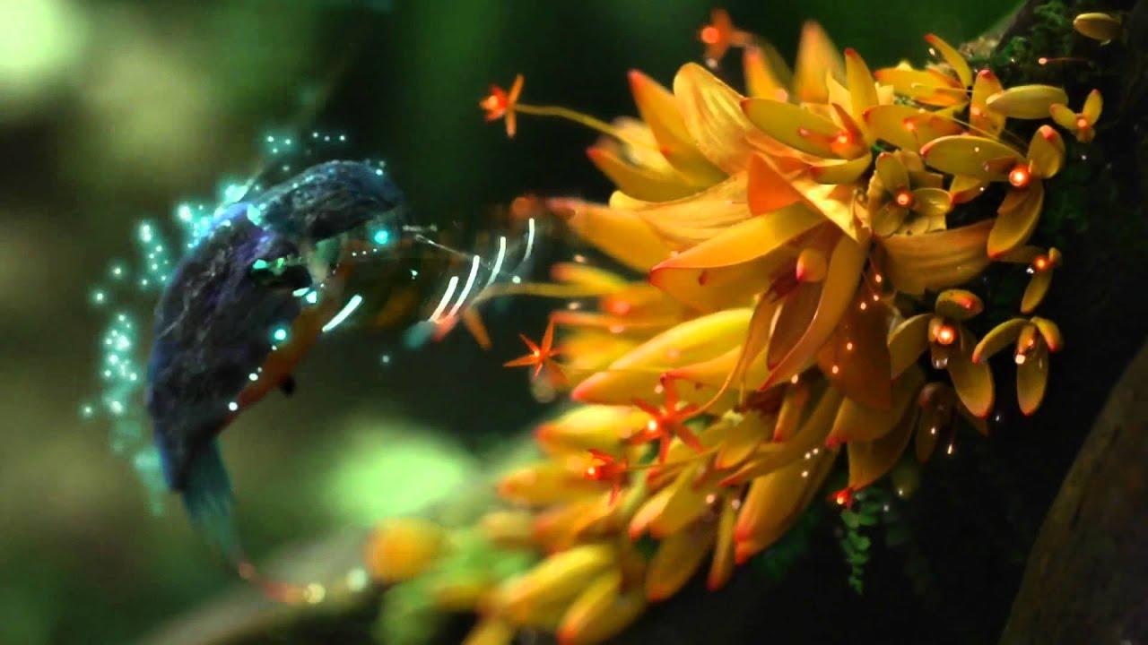 hummingbirdMisth 1080p HD.wmv