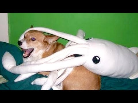These DOGS are way FUNNIER THAN CATS – COMPILATION that will make you DIE LAUGHING
