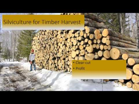 Silviculture Powerpoint