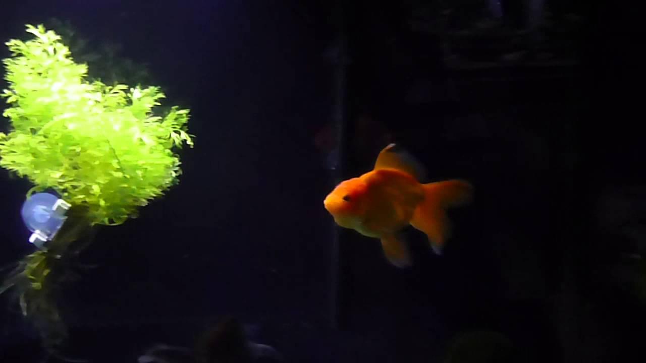Fish aquarium in ecr - Ecr 5 4 16 004