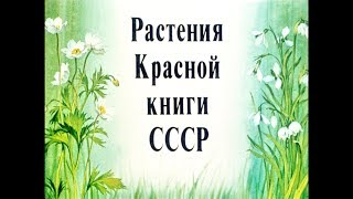 Диафильм Растения Красной книги СССР