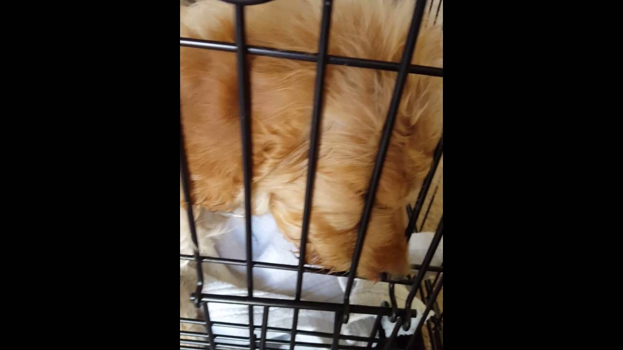 Puppy With Distemper From Puppies N Stuff Westminster Co Part 2 Of