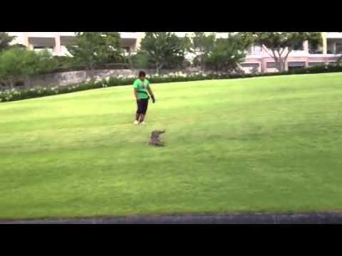 กำจัดนกพิราบในสนามกอล์ฟ ไล่นกพิราบโดยไม่ฆ่า 081-754-4370