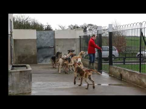 Tipperary Foxhounds - Children's Kennels Tour 2017