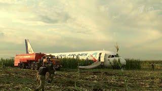 О посадке аэробуса на кукурузное поле в подмосковном Жуковском могут снять художественный фильм.