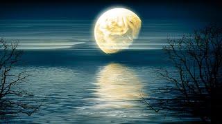 Deep Sleep Music 24/7, Sleep Meditation, Relaxing Music, Calm Music, Zen, Study Music, Sleep Music