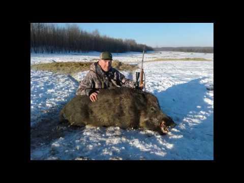 Boar Hunt Northern Alberta 250yd MAGNUM Boar