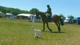 VERY SMART IRISH SPORTS HORSE