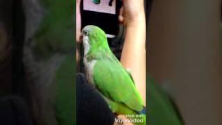 綠和尚鸚鵡coco說話 自己在罵自己篇