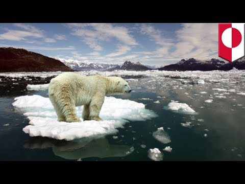 Arctic heatwave: North Pole gets warmer while the rest of Europe freezes over - TomoNews